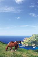 赤尾展望所から望む国賀海岸と馬