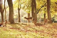 秋の奈良公園と鹿