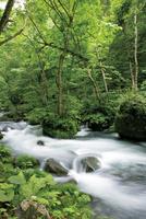 夏の奥入瀬渓流