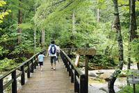 赤沢自然休養林の遊歩道