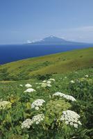 礼文島から望む利尻富士