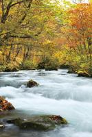 紅葉の奥入瀬渓流 三乱の流れ
