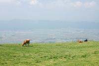 阿蘇パノラマラインより阿蘇市街と放牧された牛
