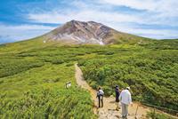 初夏の旭岳 自然探勝路
