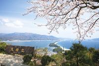 春の天橋立ビューランドから天橋立を望む 10790004561| 写真素材・ストックフォト・画像・イラスト素材|アマナイメージズ