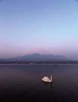 朝焼けの山中湖と富士山 10790004767| 写真素材・ストックフォト・画像・イラスト素材|アマナイメージズ