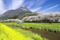 春の由布岳 10790004817  写真素材・ストックフォト・画像・イラスト素材 アマナイメージズ