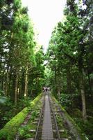 縄文杉への登山道
