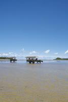 由布島を往来する水牛車