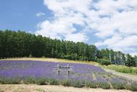 ラベンダー香る清水山ラベンダー園 10790005957| 写真素材・ストックフォト・画像・イラスト素材|アマナイメージズ