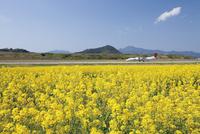 菜の花咲く空港ふれあい公園