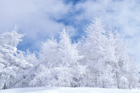 山形蔵王の樹氷