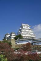 姫路城の紅葉 10790006665| 写真素材・ストックフォト・画像・イラスト素材|アマナイメージズ