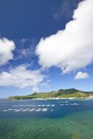 魚養殖用のいけすが見える小笠原父島の二見港近海