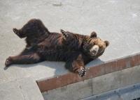 昭和新山熊牧場 10790007922| 写真素材・ストックフォト・画像・イラスト素材|アマナイメージズ