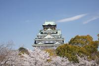 桜咲く大坂城跡