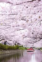 桜咲く松川公園を遊覧船で観光 10790009502| 写真素材・ストックフォト・画像・イラスト素材|アマナイメージズ