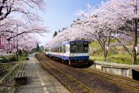 桜咲くのと鉄道七尾線の能登鹿島駅のホーム