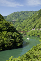初夏の庄川峡を走る遊覧船
