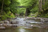 足羽川渓谷にかかる初夏のかずら橋と遊歩道
