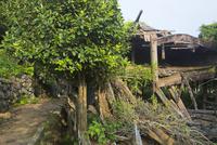 野崎島 旧野崎集落 10790011383| 写真素材・ストックフォト・画像・イラスト素材|アマナイメージズ