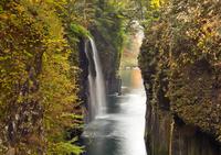 黄葉映える真名井の滝 10790011607| 写真素材・ストックフォト・画像・イラスト素材|アマナイメージズ