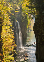黄葉映える真名井の滝 10790011609| 写真素材・ストックフォト・画像・イラスト素材|アマナイメージズ
