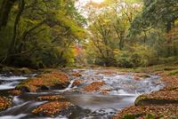 紅葉映える菊池川 10790011623| 写真素材・ストックフォト・画像・イラスト素材|アマナイメージズ