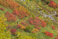 紅葉映える赤岳銀泉台 10790011745| 写真素材・ストックフォト・画像・イラスト素材|アマナイメージズ