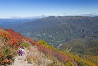 黒岳の登山道