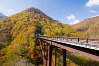 黄葉映える甲子大橋