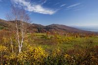 紅葉の八幡平 御在所湿原