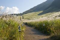 秋の仙石原のススキ草原 遊歩道を歩く人々 10790012139| 写真素材・ストックフォト・画像・イラスト素材|アマナイメージズ