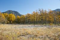 美しく紅葉する秋の戦場ヶ原