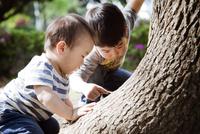 樹木の観察をする子供たち