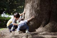樹木の観察をする子供たち 10798000249| 写真素材・ストックフォト・画像・イラスト素材|アマナイメージズ