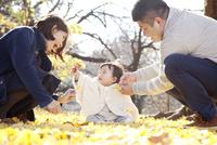 銀杏の葉で埋めつくされた地面の上で遊んでいる親子 10798000293| 写真素材・ストックフォト・画像・イラスト素材|アマナイメージズ
