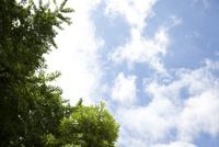緑の木々と青空 10798000314| 写真素材・ストックフォト・画像・イラスト素材|アマナイメージズ