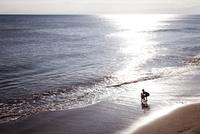 波打ち際で遊んでいる父親と子供