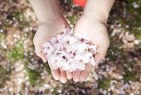 桜の花びらをのせている女性の手