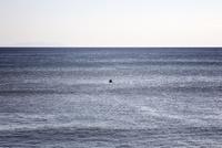 大海原に1人浮かぶサーファー 10798000619| 写真素材・ストックフォト・画像・イラスト素材|アマナイメージズ
