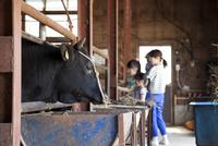 牛舎で牛を眺める家族