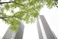高層ビルと緑の木々