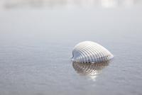 波打ち際にある白い貝殻 10802000154| 写真素材・ストックフォト・画像・イラスト素材|アマナイメージズ