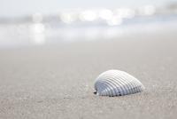 砂浜と白い貝殻 10802000155| 写真素材・ストックフォト・画像・イラスト素材|アマナイメージズ