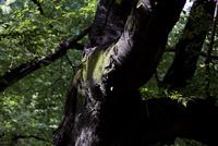 木の幹に生えた苔 10802000160| 写真素材・ストックフォト・画像・イラスト素材|アマナイメージズ