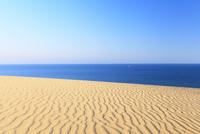 砂丘より望む青い海に白いヨット
