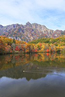 秋の戸隠連峰と鏡池にカモ