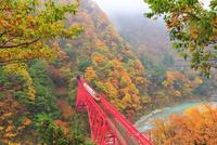 秋の黒部峡谷鉄道・トロッコ電車と紅葉に霧 10816001203| 写真素材・ストックフォト・画像・イラスト素材|アマナイメージズ