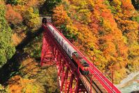 秋の黒部峡谷鉄道・トロッコ電車と紅葉